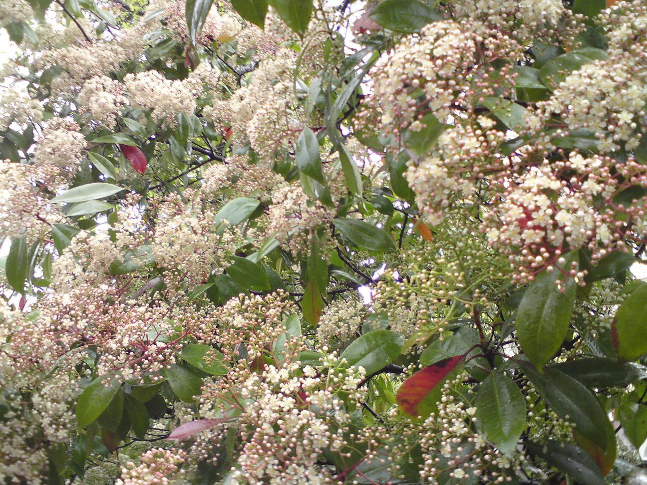 Spring Flowering Shrubs Tinybloomingplaces Co Uk