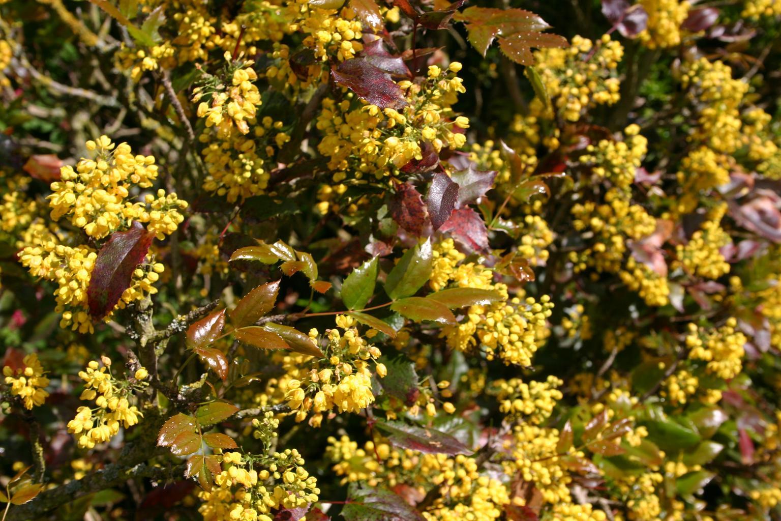 Spring Flowering Shrubs Tinybloomingplaces
