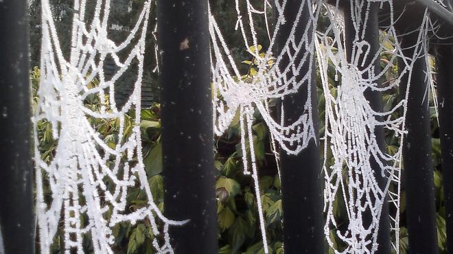 frosty cobwebs