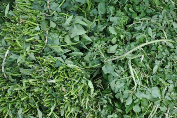 vietnam greens a plenty