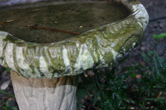 stone bird bath close up