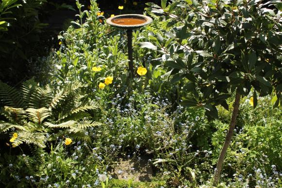 birdbath and poppies