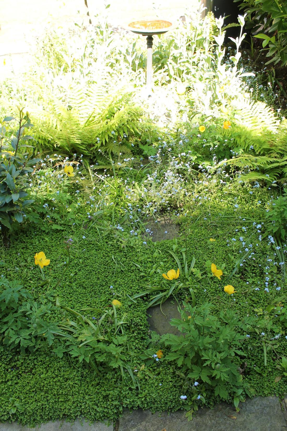 mossy magic