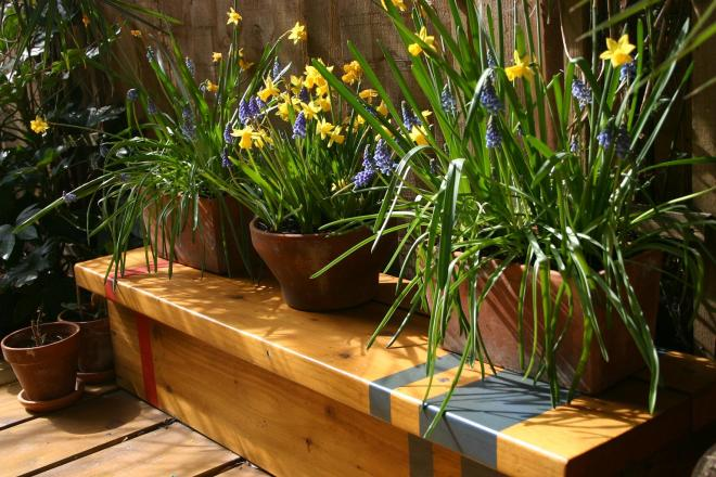 dafffs and muscari on bench